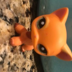 LPs shorthair cat #1643